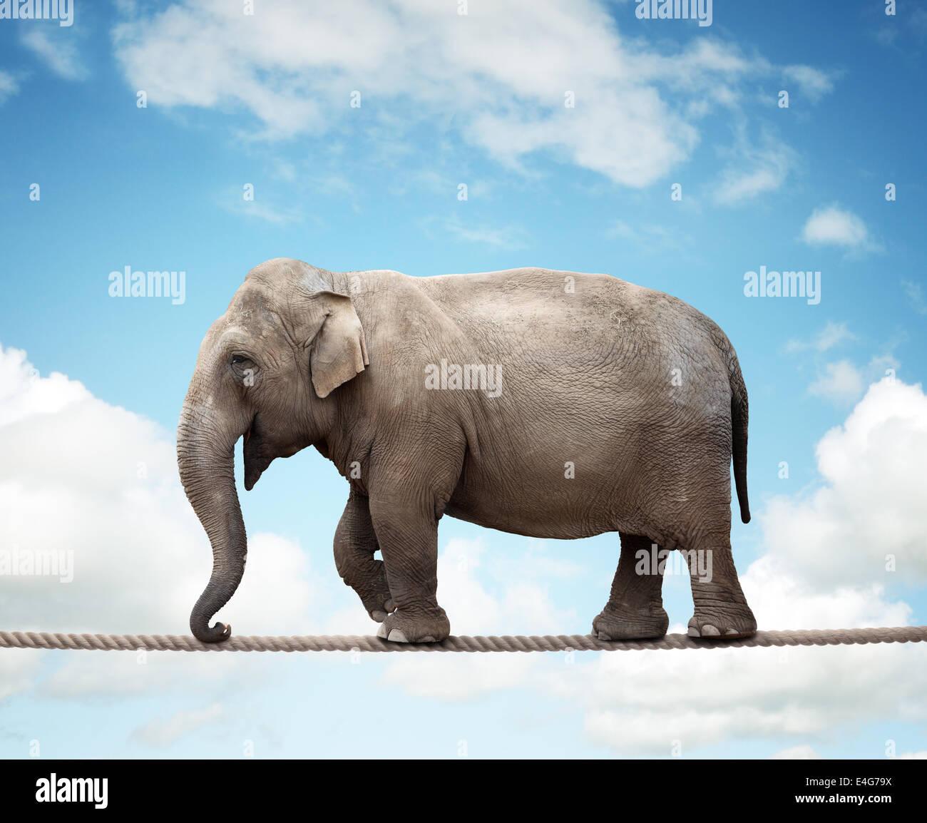 Elefant auf Drahtseil Stockbild