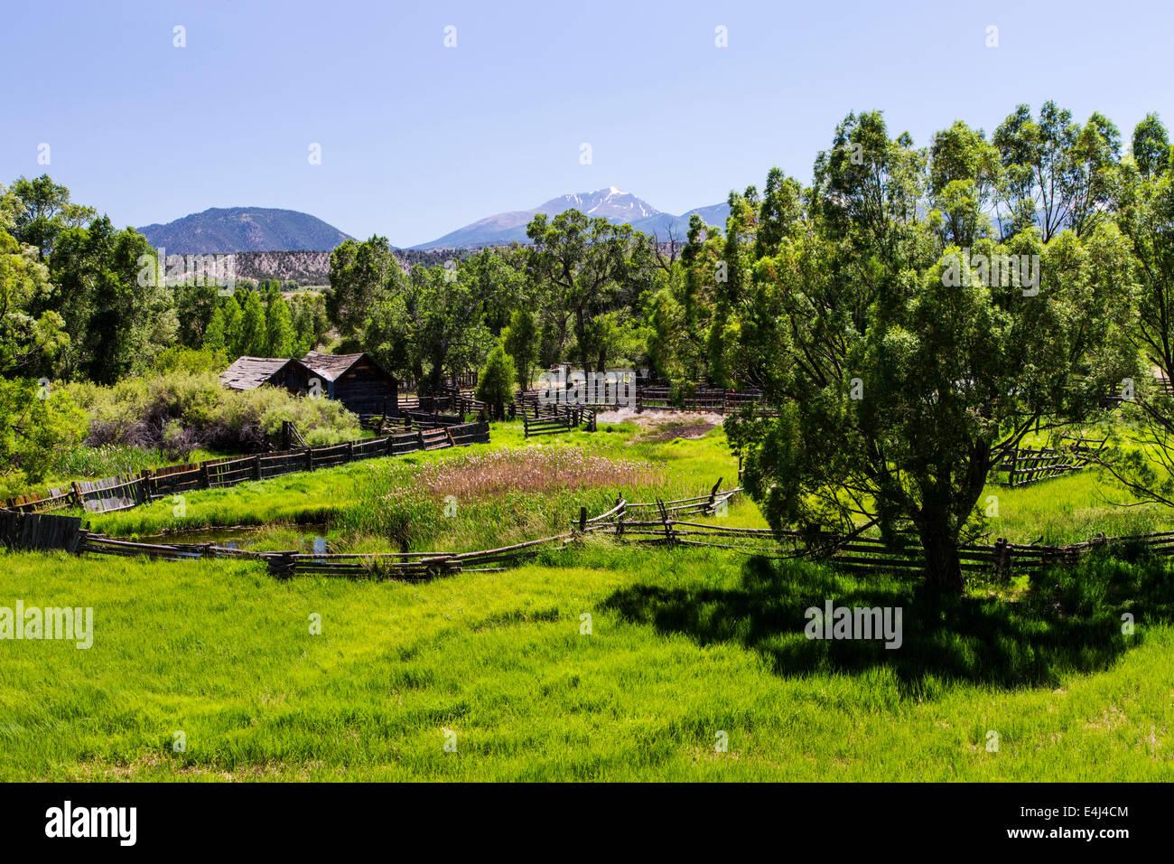 Üppige Weiden entlang des Arkansas River, Rocky Mountains hinaus zentralen Colorado, USA Stockbild