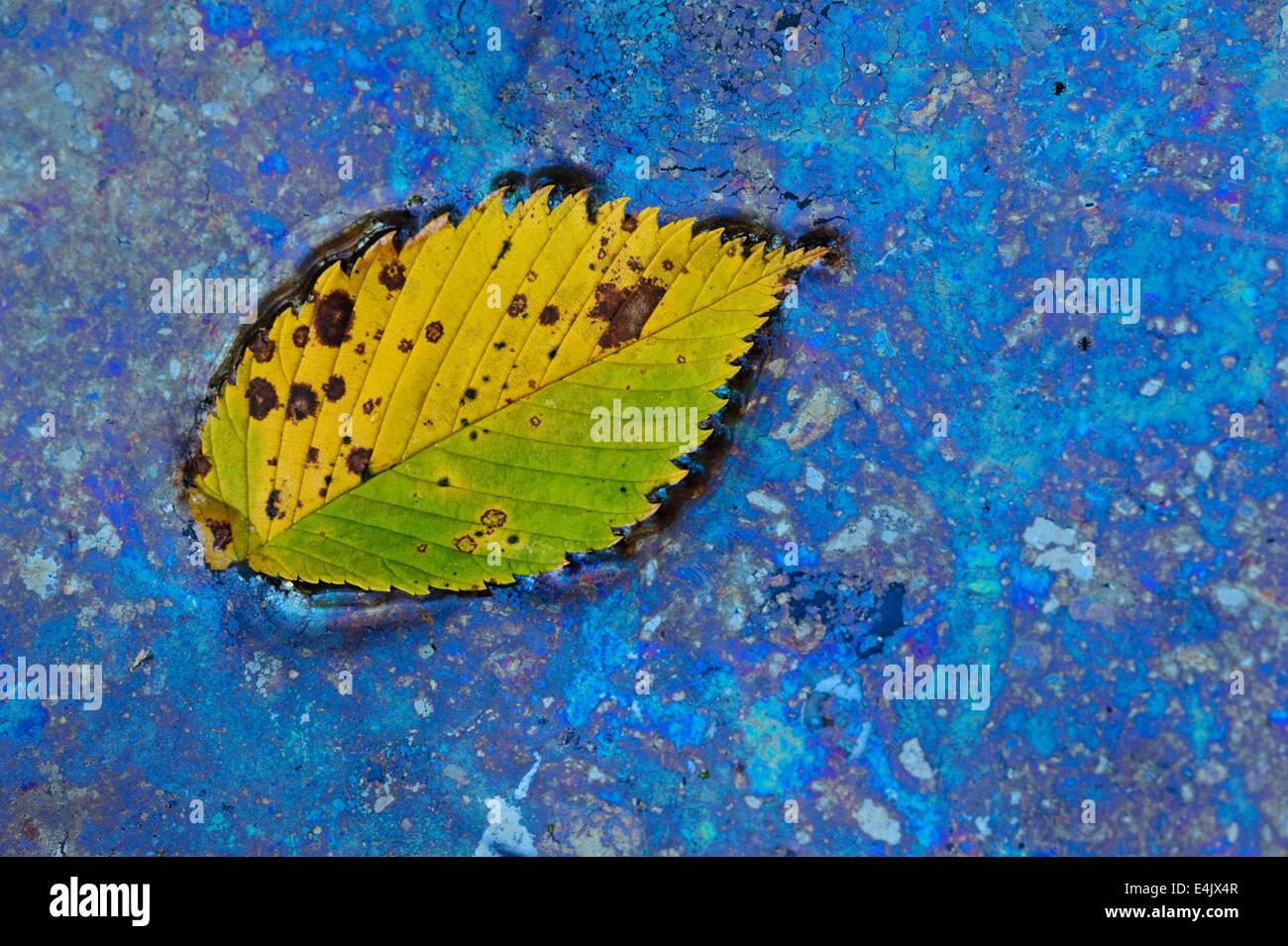 Natürlich bilden Bakterien (Leptothrix Discophora) um ein Blatt in einem frühlingshaften Teich Fütterung Stockbild