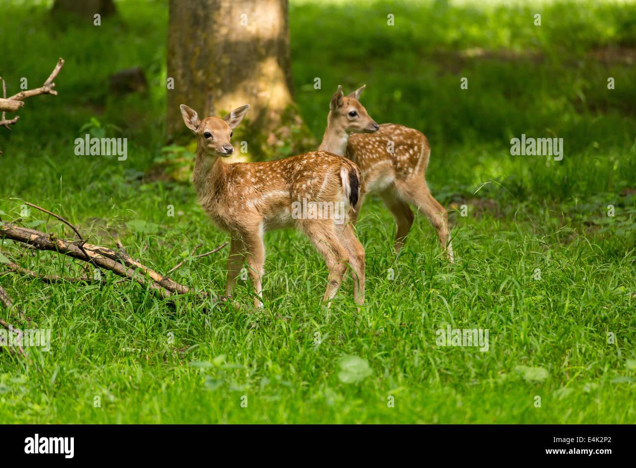 Painting Deer Antlers White
