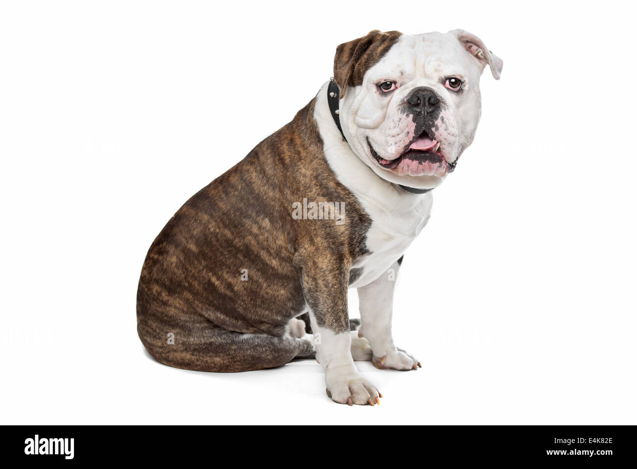 Charmant Baby Bulldog Färbung Seiten Ideen - Malvorlagen-Ideen ...