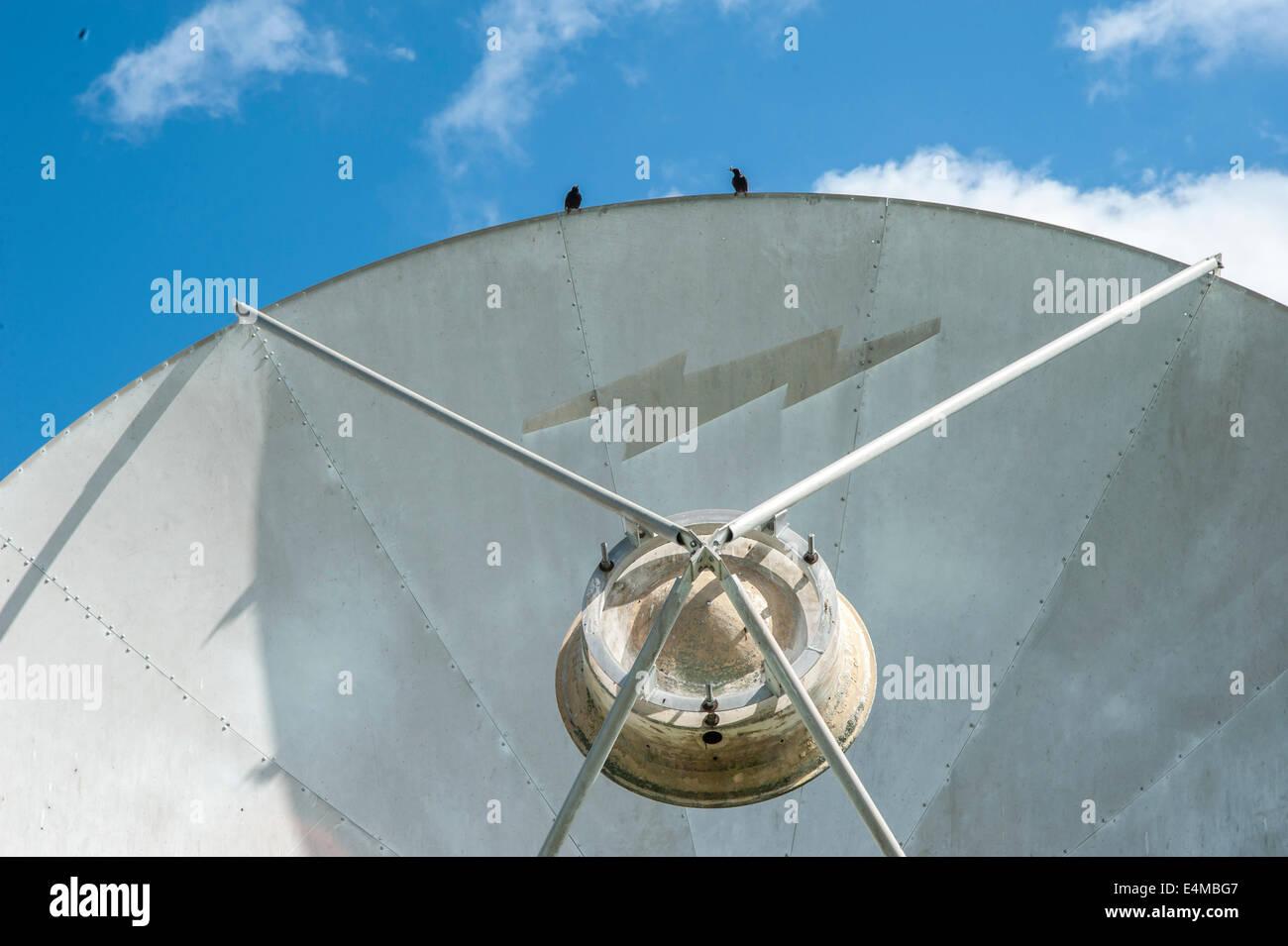 Vögel auf Empfänger Satellitenschüssel Stockbild