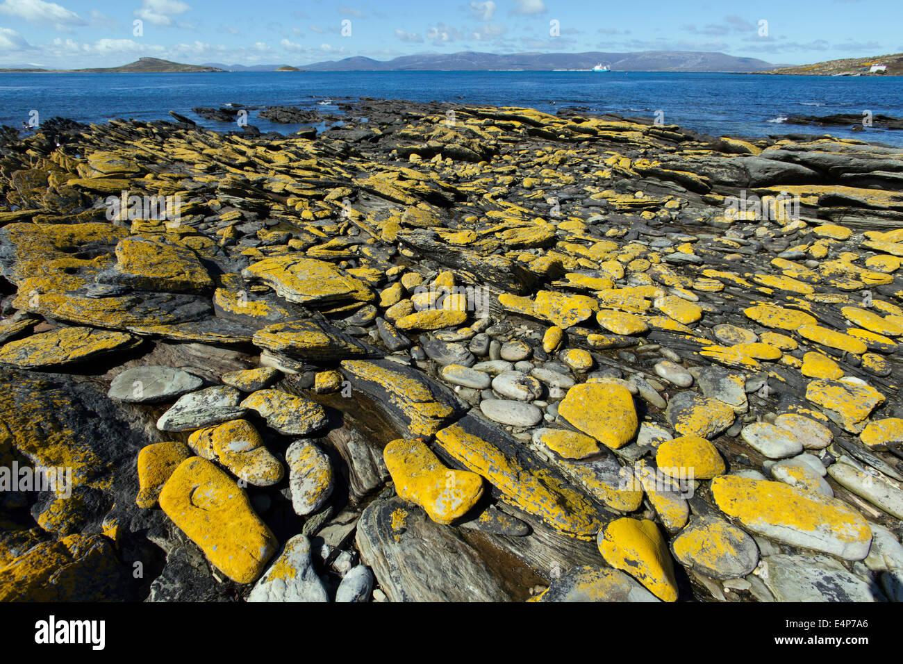 Kuestenlandschaft - Falkland Inseln Stockbild