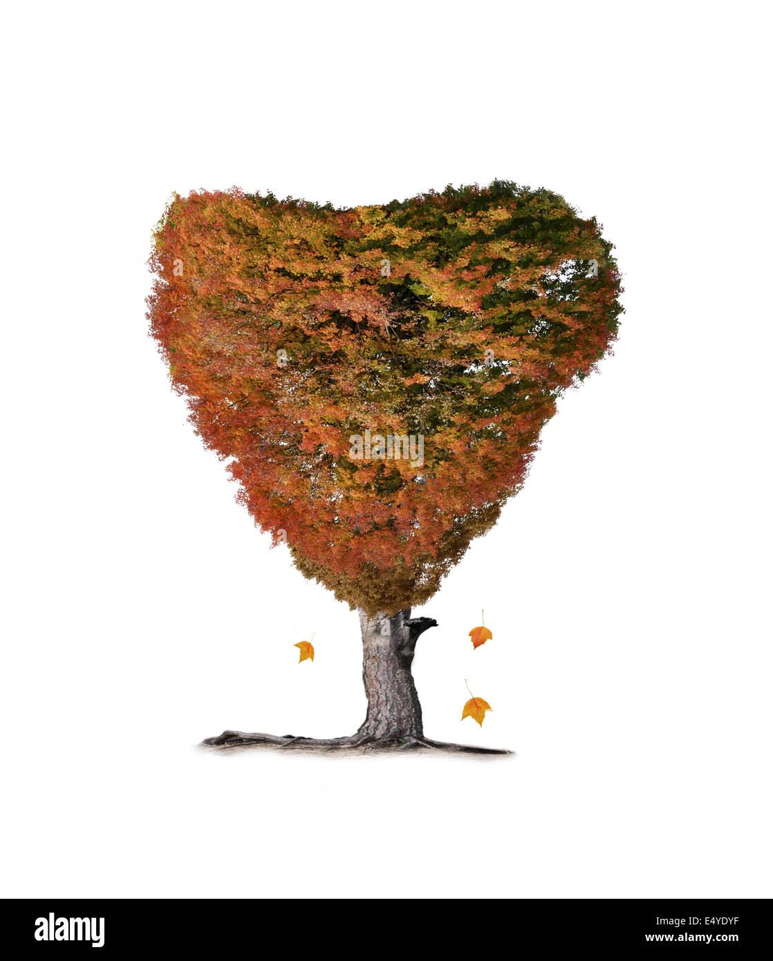 Bunter Herbst Baum Stockbild