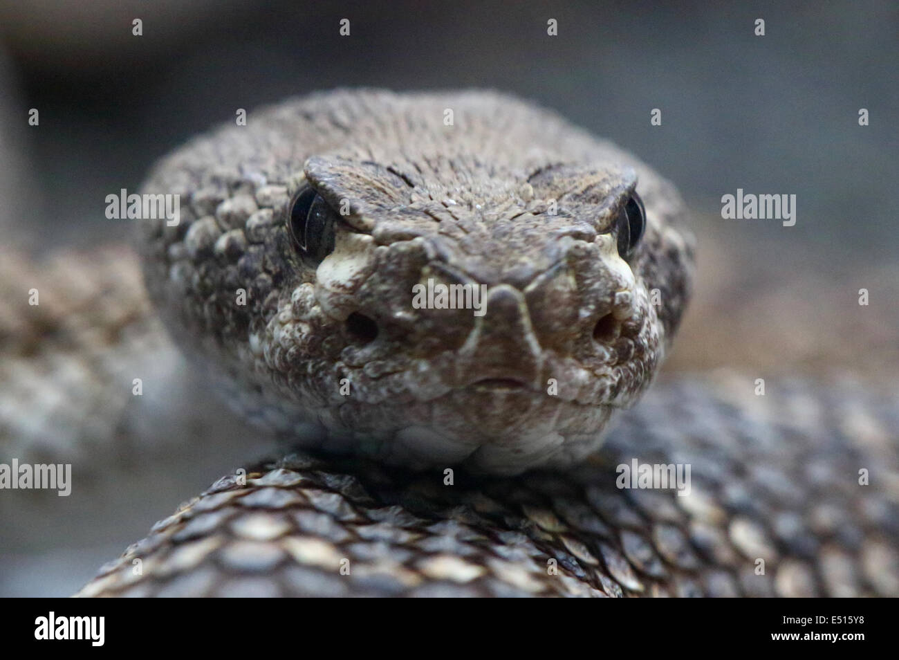 Frontside Stockfotos & Frontside Bilder - Alamy