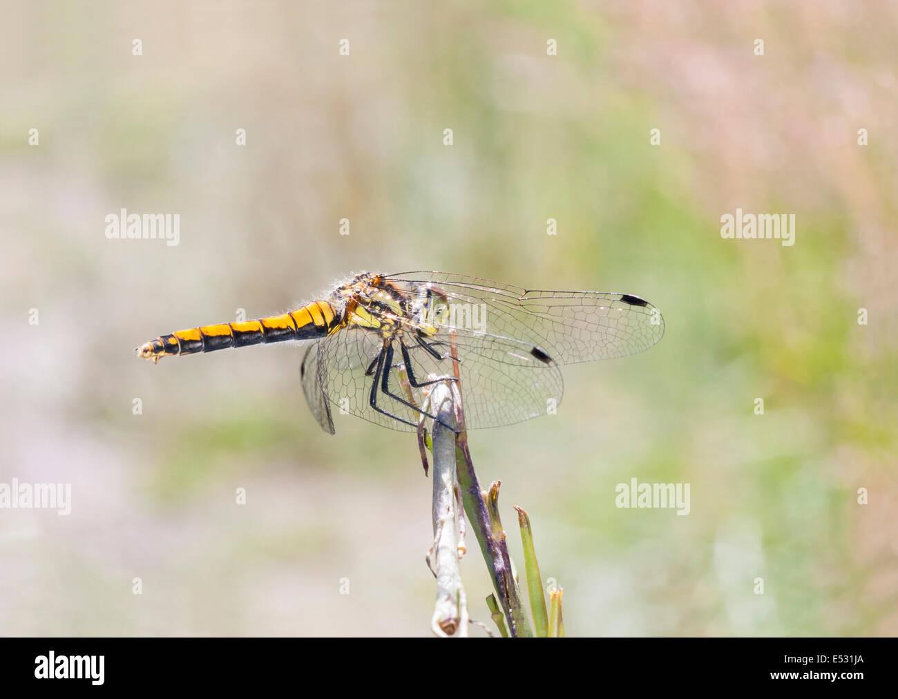 Atemberaubend Libelle Farbung Seite Bilder - Malvorlagen Von Tieren ...