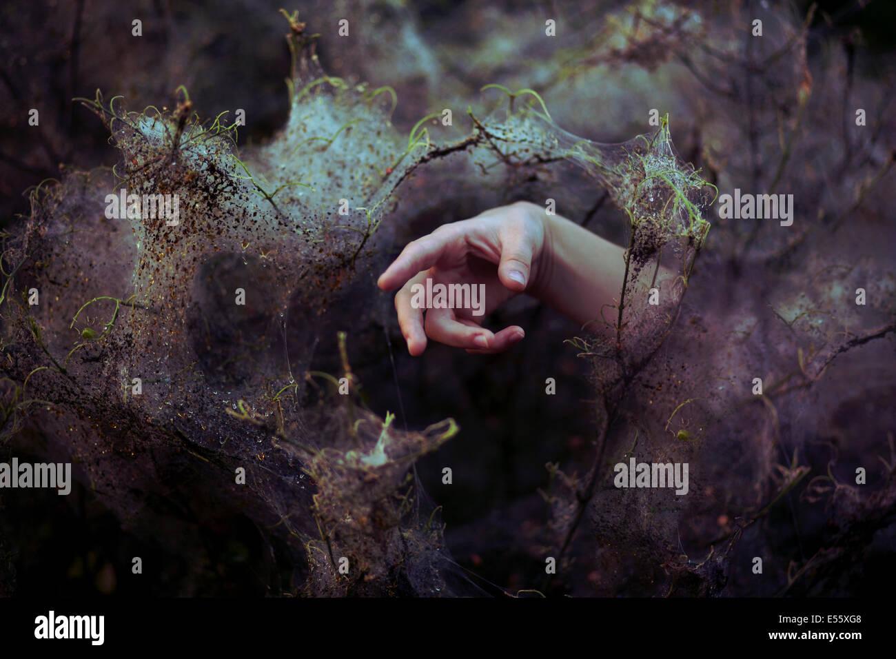 Hand greift durch Spinnweben Stockfoto