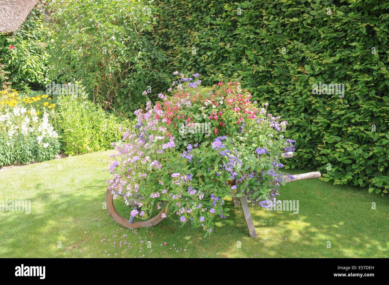 fuchsia hedge stockfotos fuchsia hedge bilder alamy. Black Bedroom Furniture Sets. Home Design Ideas