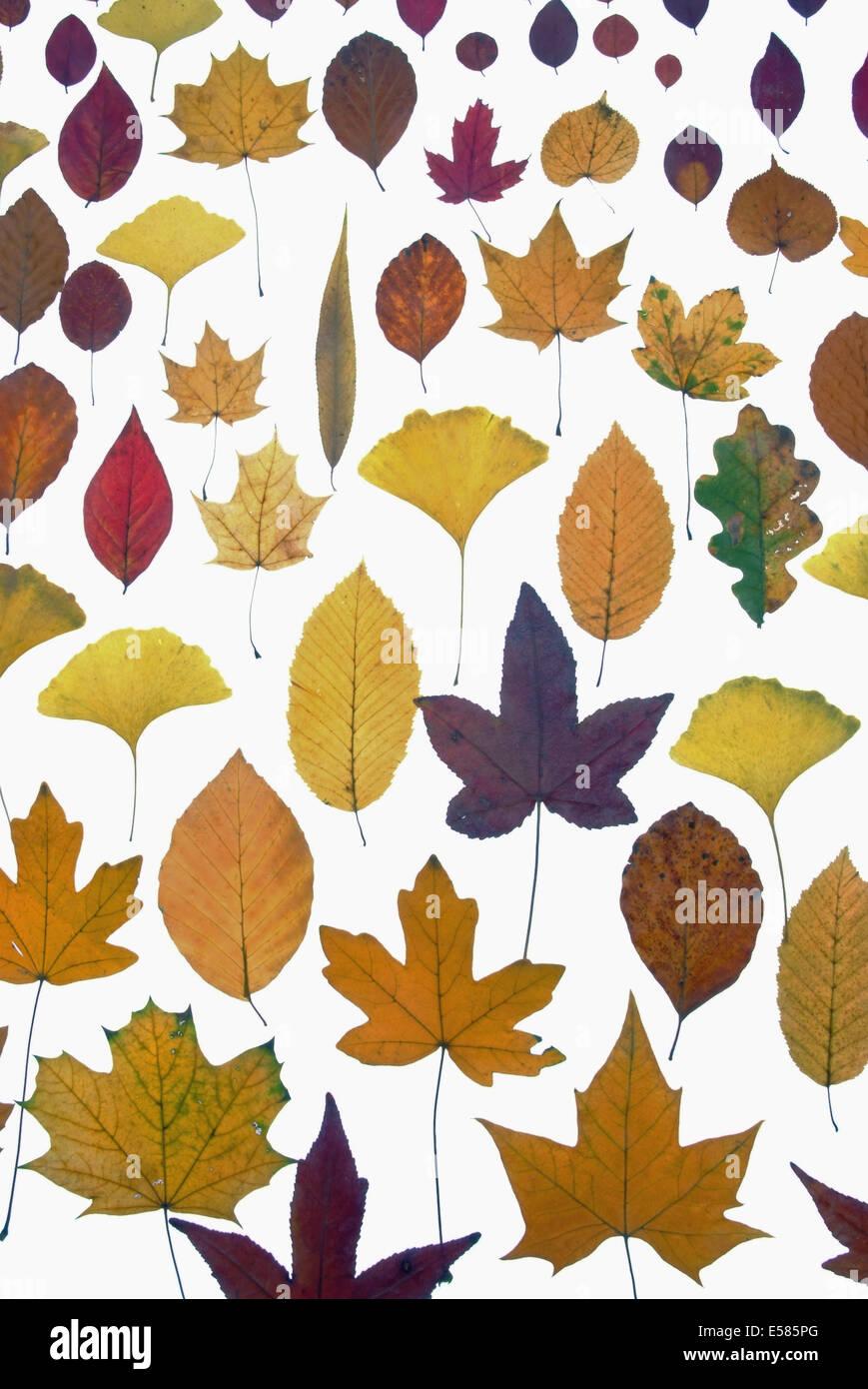 Schöne verschiedene Blätter Stockbild