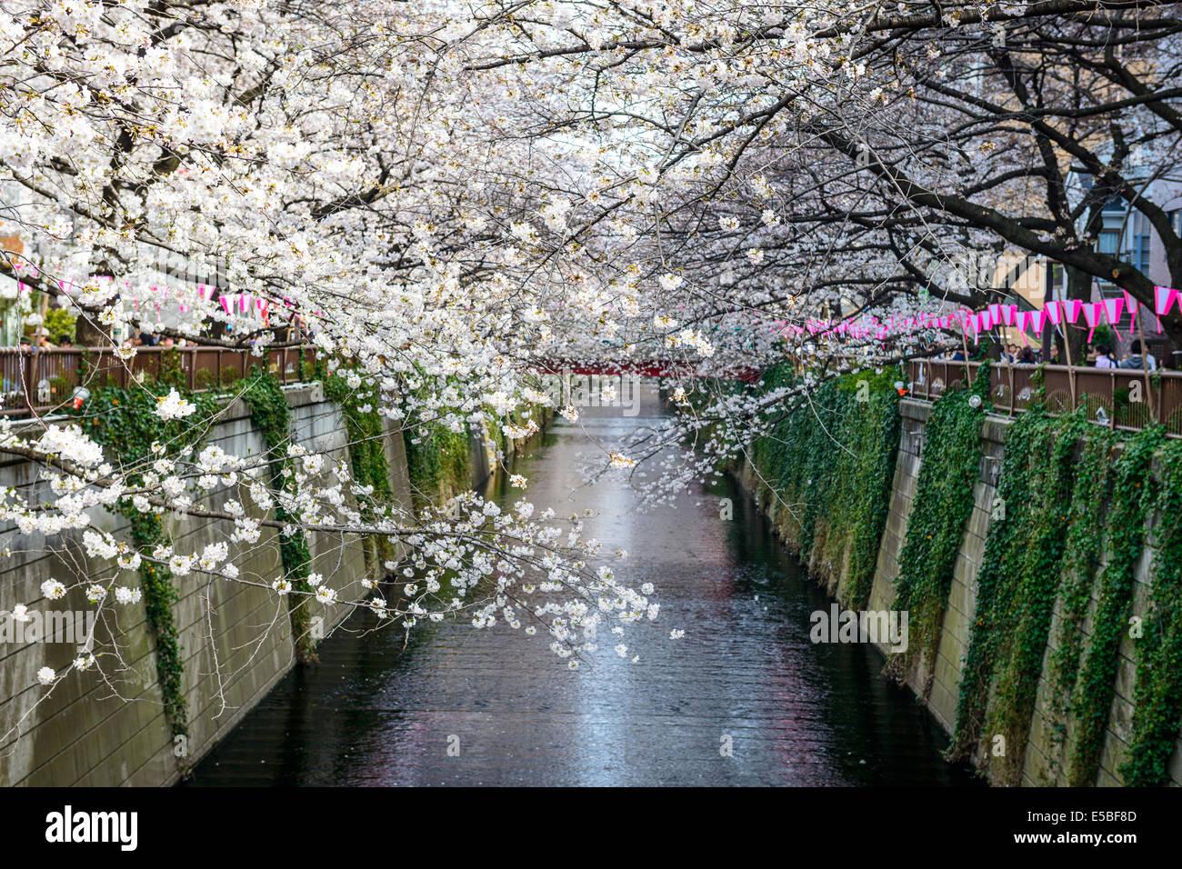 Tokyo, Japan am Meguro-Kanal in die Frühjahrssaison. Stockbild
