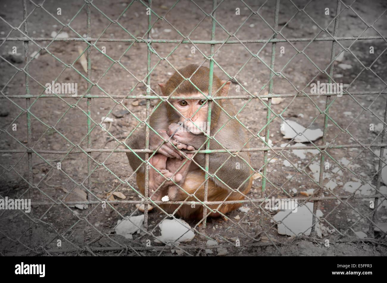 Traurigen Affen Stockbild
