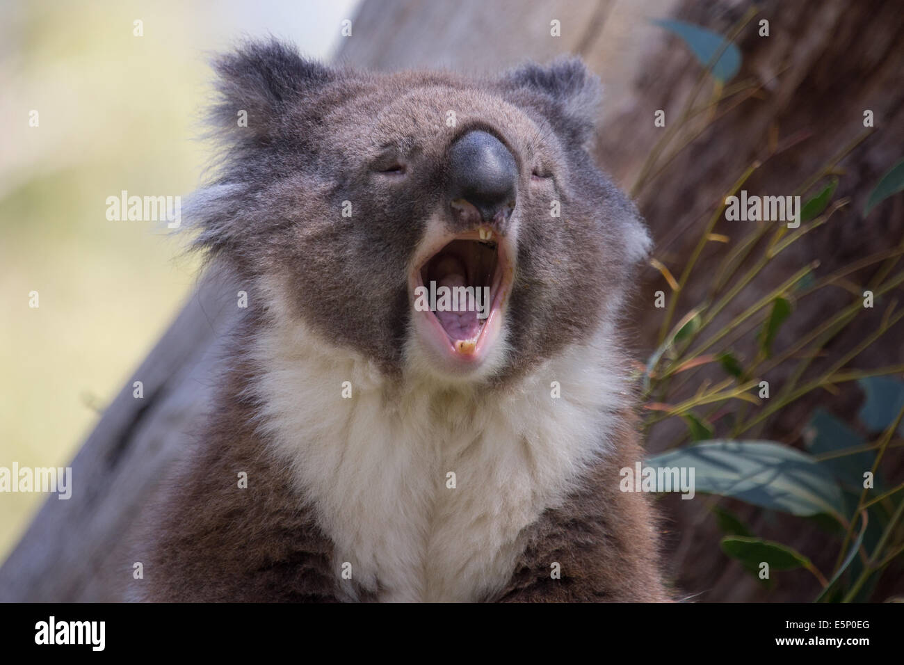 Fein Süße Panda Malvorlagen Bilder - Entry Level Resume Vorlagen ...