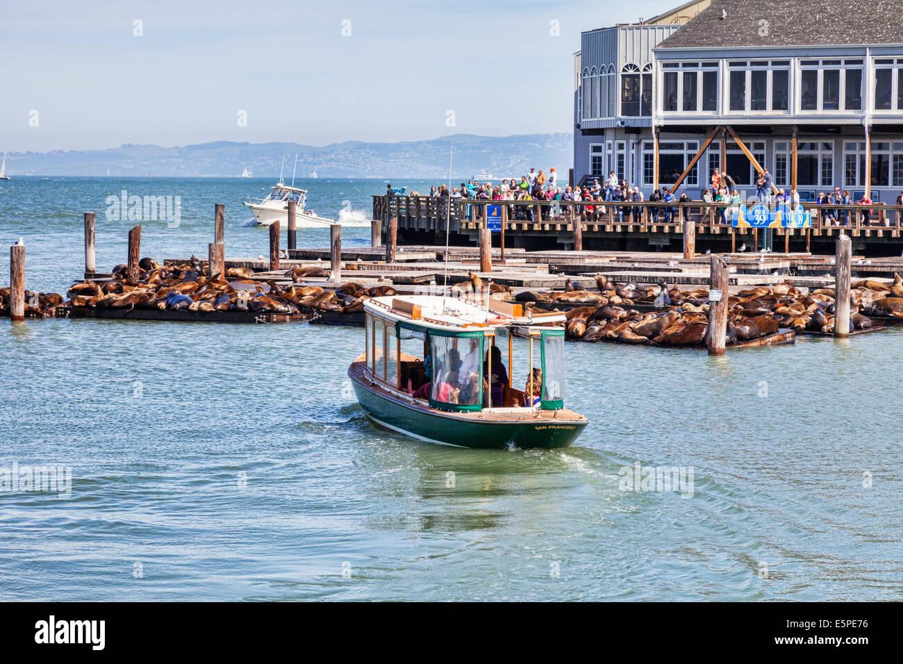 Massen von Touristen versammeln, um die berühmten Seelöwen am Pier 39 in San Francisco anzeigen. Stockbild