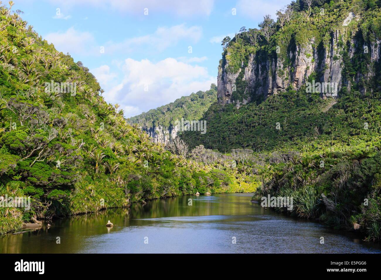 Üppige Vegetation und Klippen, Porari Fluss, Paparoa National Park, West Coast, Südinsel, Neuseeland, Stockbild