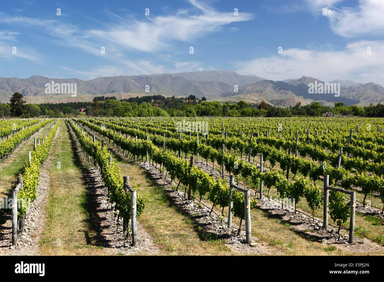 Weinberge, Renwick, in der Nähe von Blenheim, Marlborough Region, Südinsel, Neuseeland, Pazifik Stockfoto