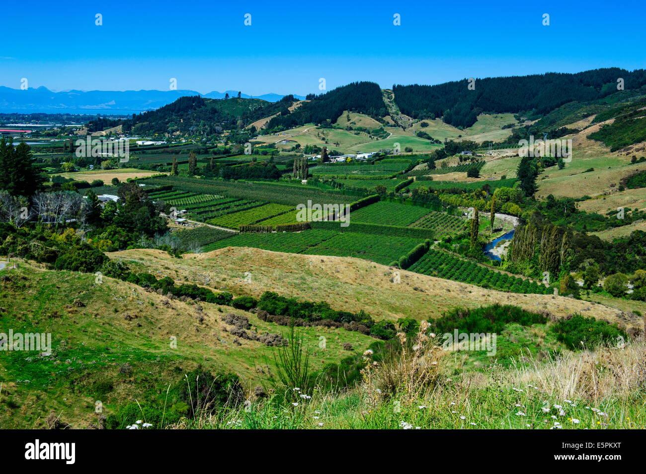 Blick über das grüne Tal des Kahurangi-Nationalpark, Südinsel, Neuseeland, Pazifik Stockbild