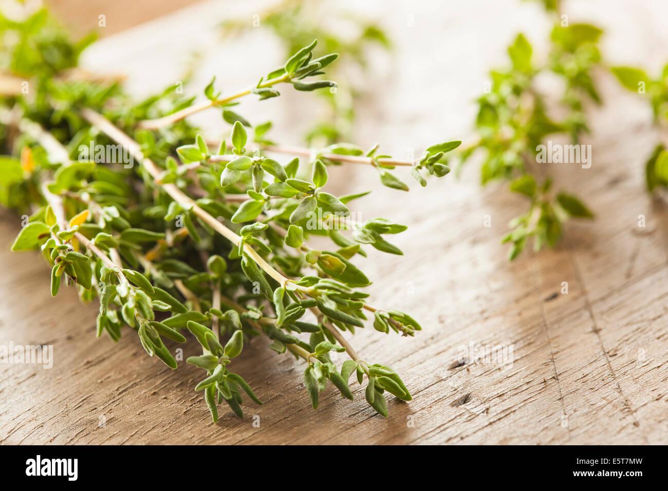 Rohe Bio grüne Thymian in einem Bündel Stockbild