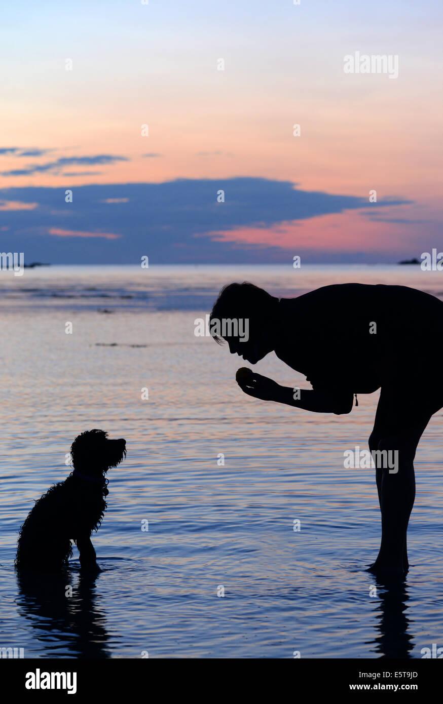 Cockapoo Welpen zum Blindenführhund zu sitzen Stockbild