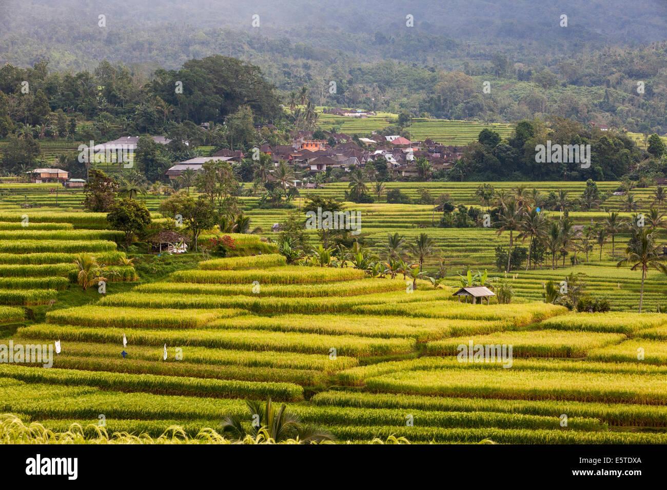 Jatiluwih, Bali, Indonesien.  Reisterrassen.  Dorf im Hintergrund. Stockbild