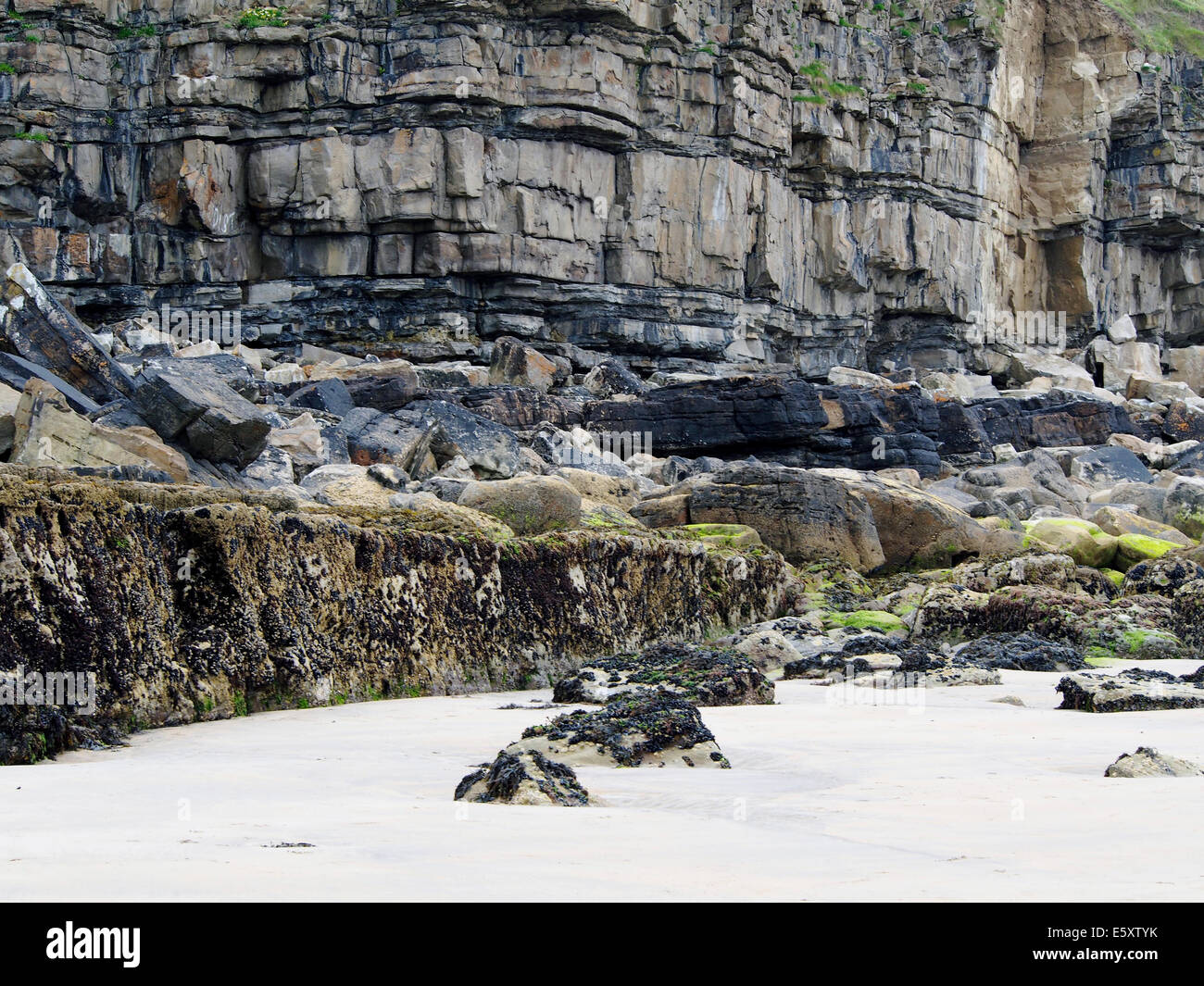 Cliff mit horizontal gebettet Schichten und eine Welle schneiden Plattform an der Basis in der Nähe von Mullaghmore, Stockbild