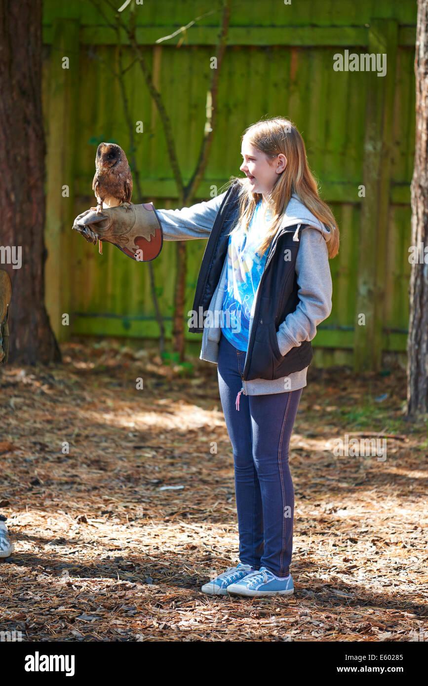 Junges Mädchen mit einem melanistische Waldkauz auf eine Falknerei Experience Center Parcs Sherwood Forest Stockbild