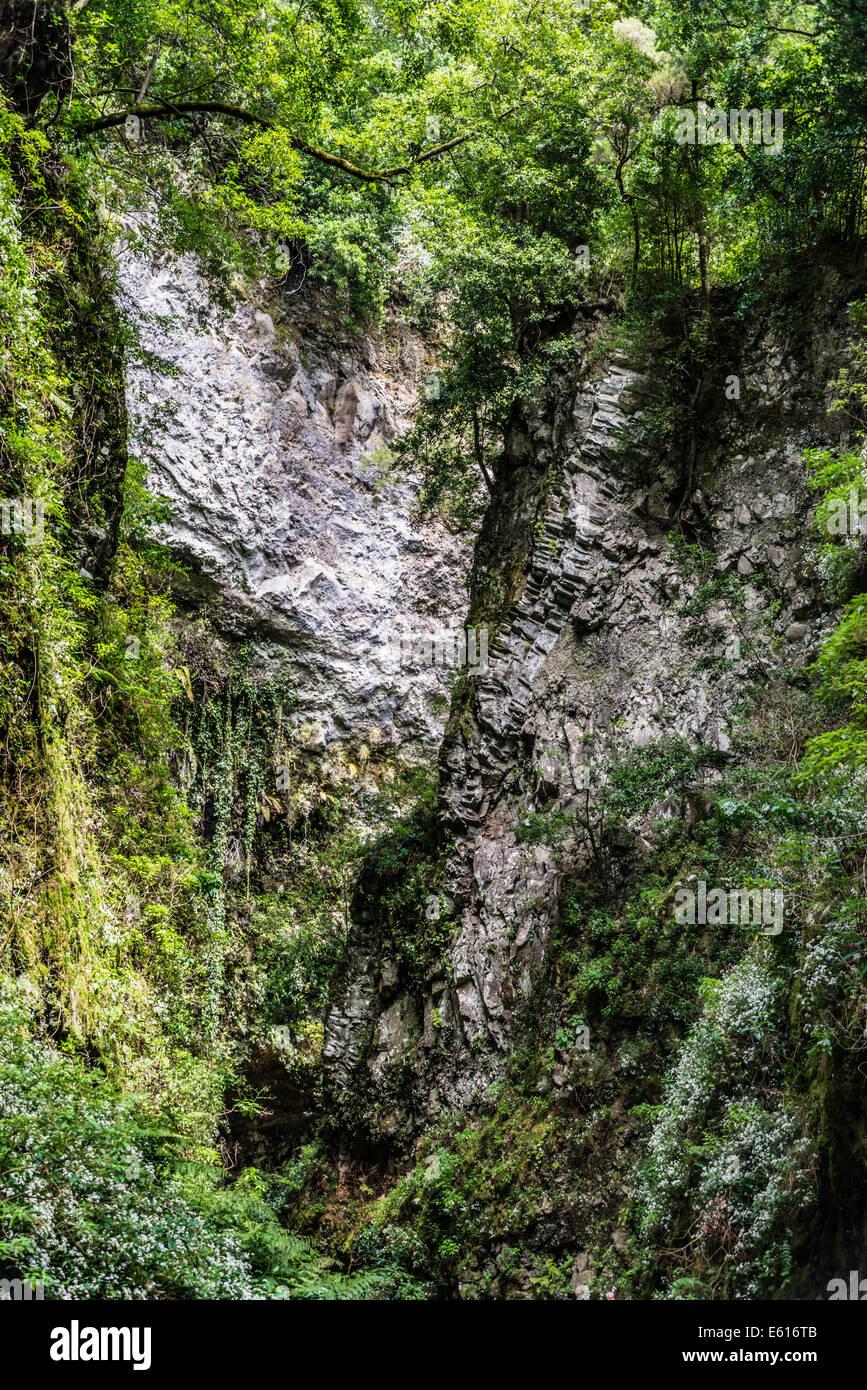 Barranco del Agua Canyon, Laurel Wald von Los Tilos, La Palma, Kanarische Inseln, Spanien Stockbild