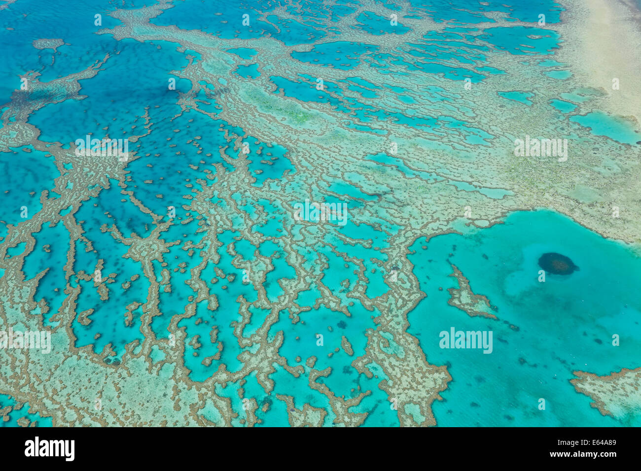 Great Barrier Reef, Queensland, Australien Stockbild