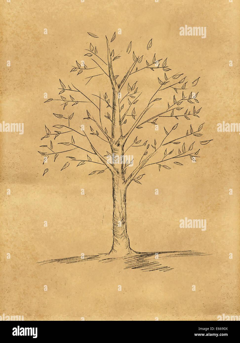baum-skizze mit blätter auf papier stockfoto, bild: 72668202 - alamy