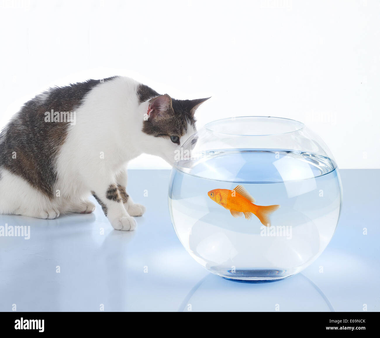 fishbowls stockfotos fishbowls bilder alamy. Black Bedroom Furniture Sets. Home Design Ideas