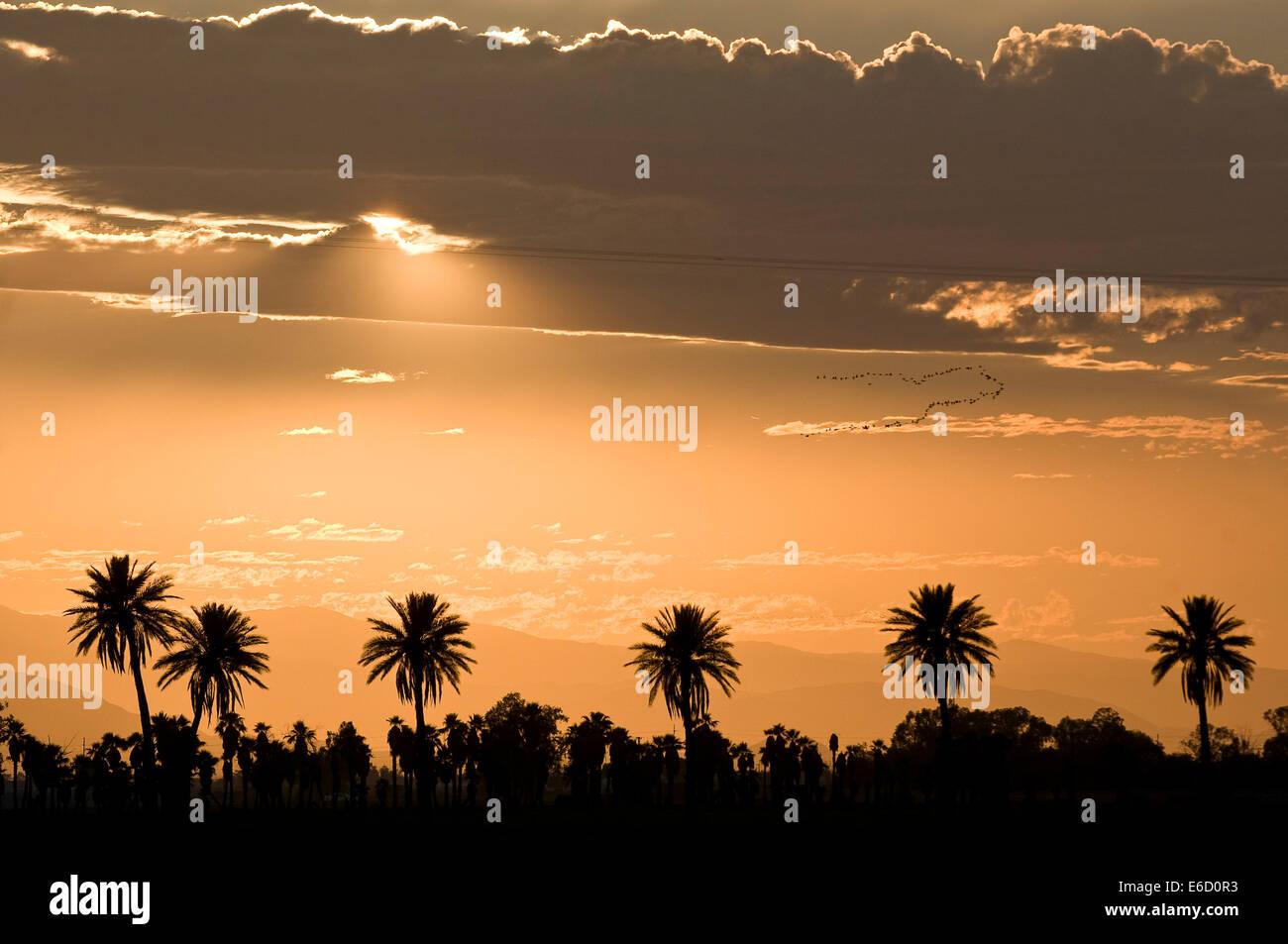 21 Palmen Kalifornien