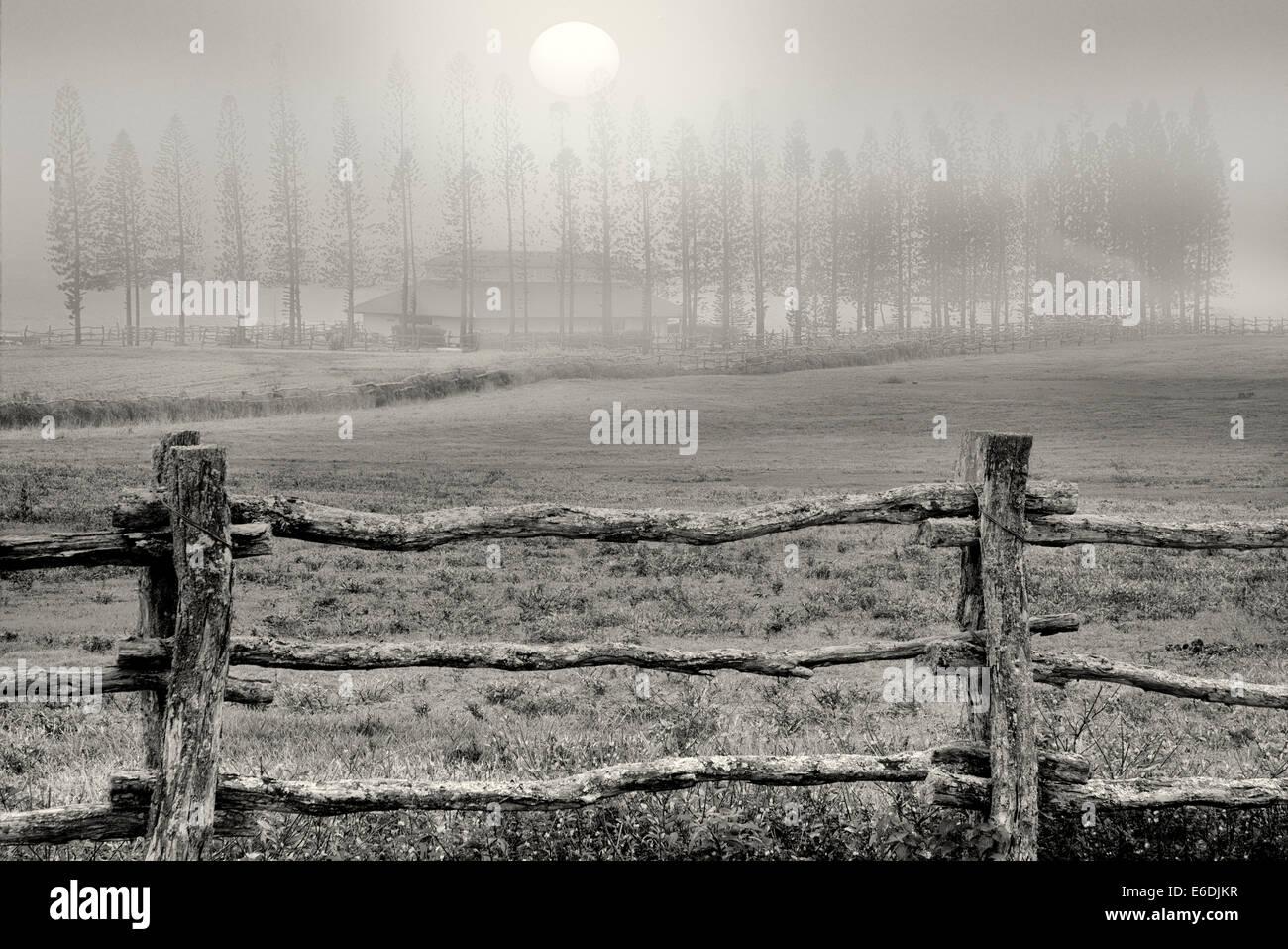 Zaun Weide und Cook Kiefern im Nebel mit Scheune Stallungen am