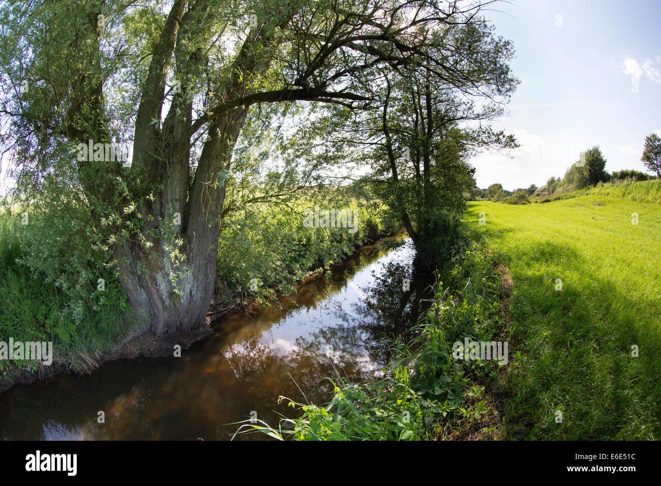 Bach, Bach, Weide, Bach, Bachlauf, Bille, Schleswig-Holstein, Deutschland, Weide, Baum, Salix, Ufer Stockbild
