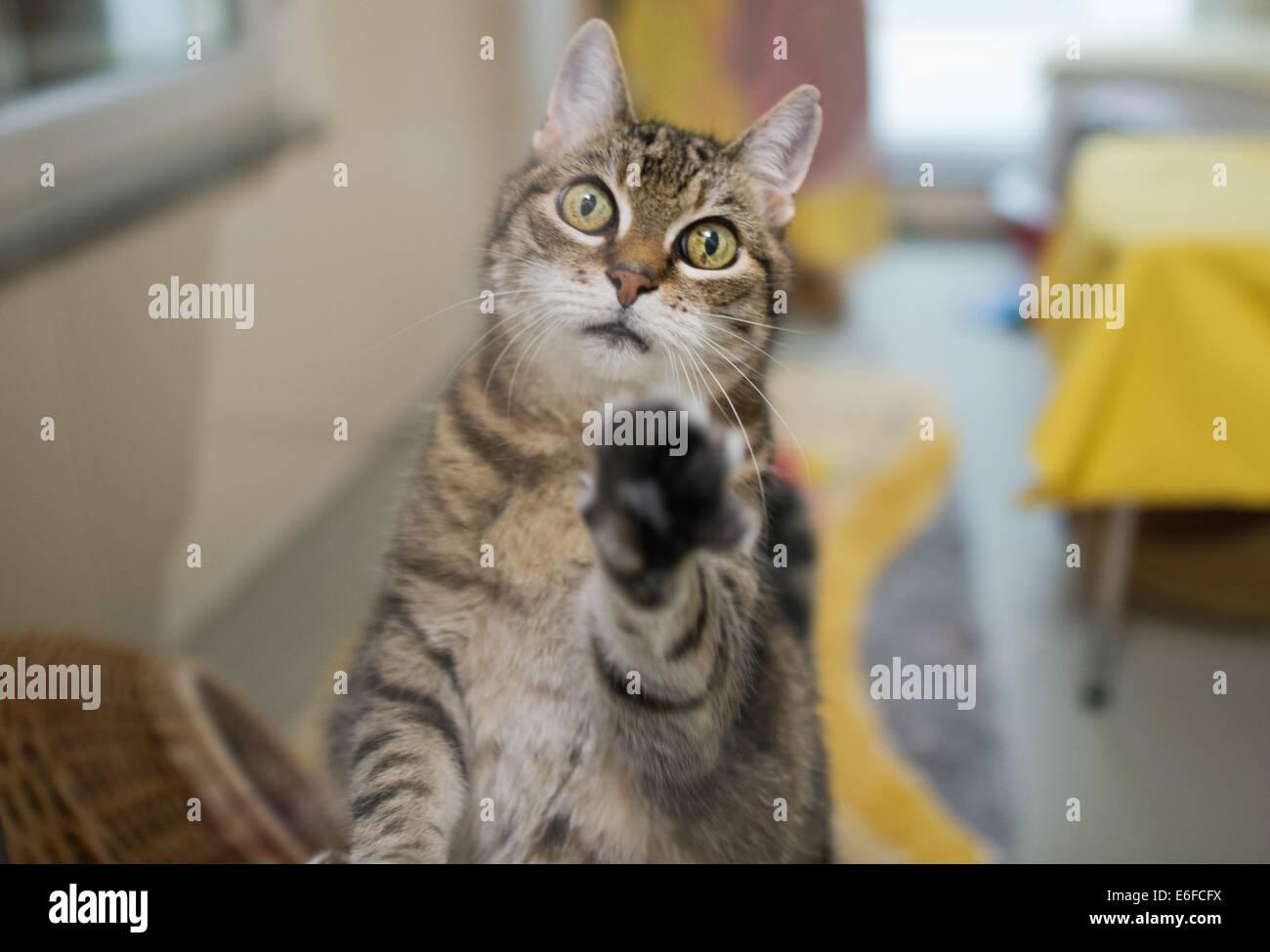 Katzenbabys Bilder Zum Ausdrucken