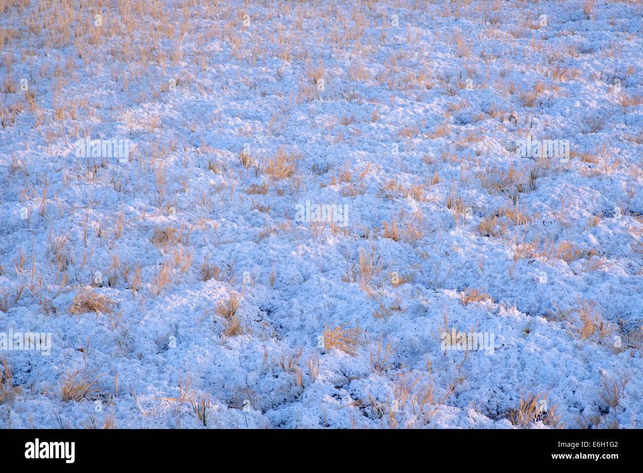 Nahaufnahme von Borax und Rasen. Borax Lake Preserve, Oregon Stockbild