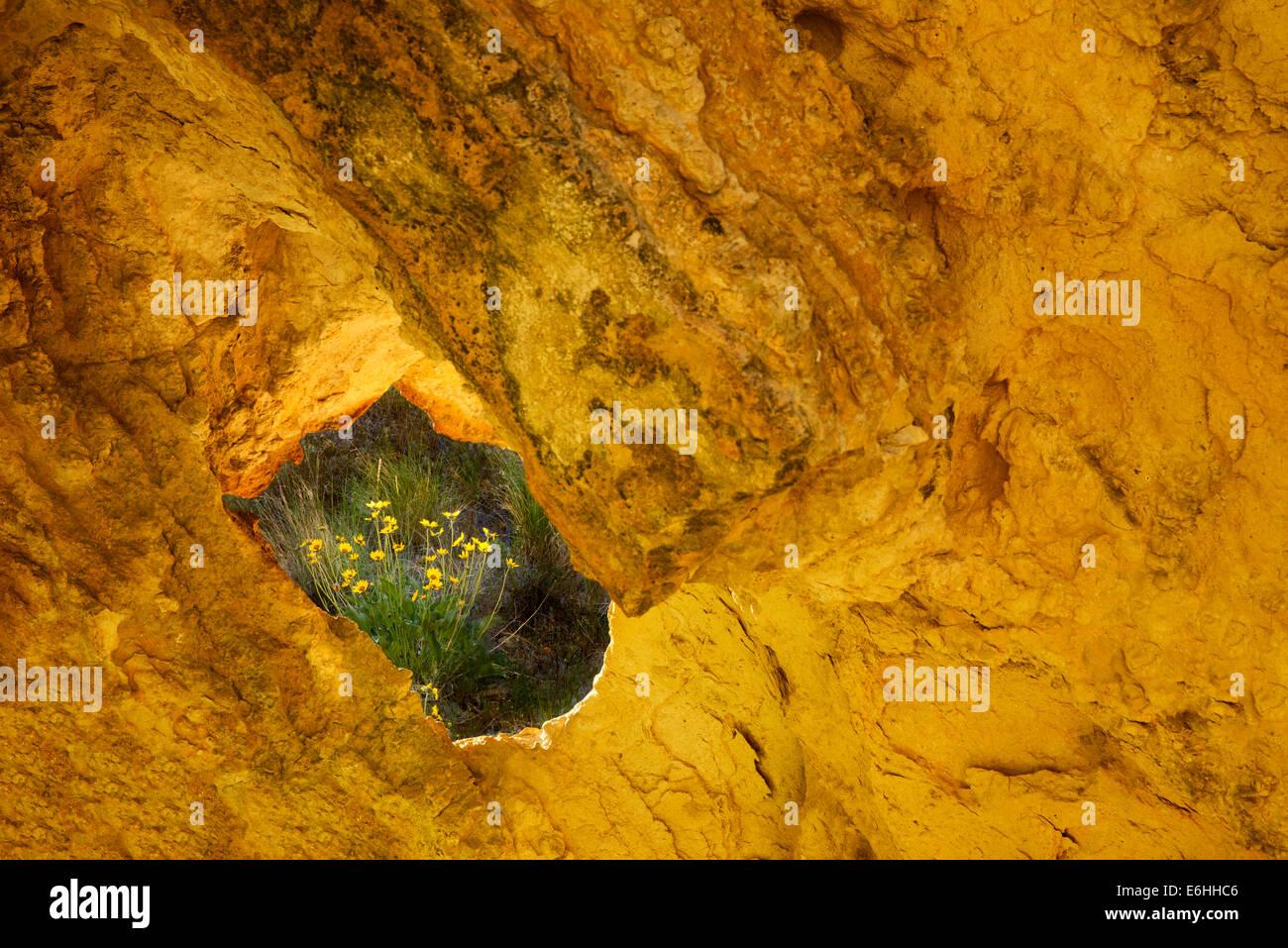 Balsamwurzel Blumen gesehen durch Loch im Felsen. Leslie Gultch, Oregon Stockbild