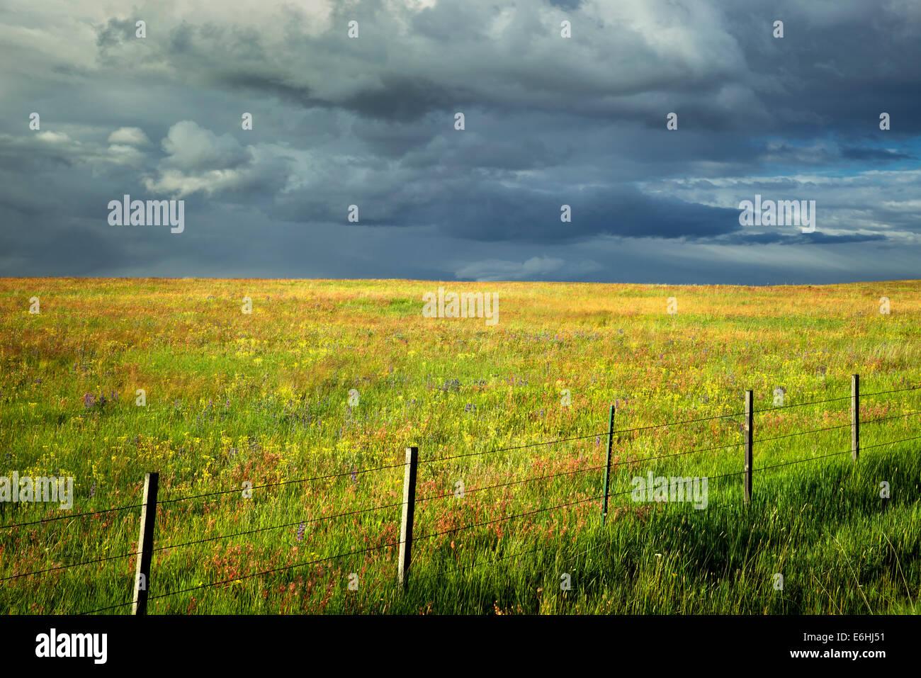 Zaun Gewitterwolken und Wildblumen. Zumwaly Prairie Preserve, Oregon Stockbild