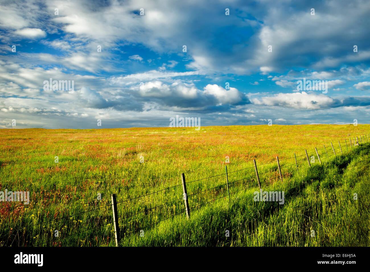 Zaun und Wildblumen. Zumwaly Prairie Preserve, Oregon Stockbild