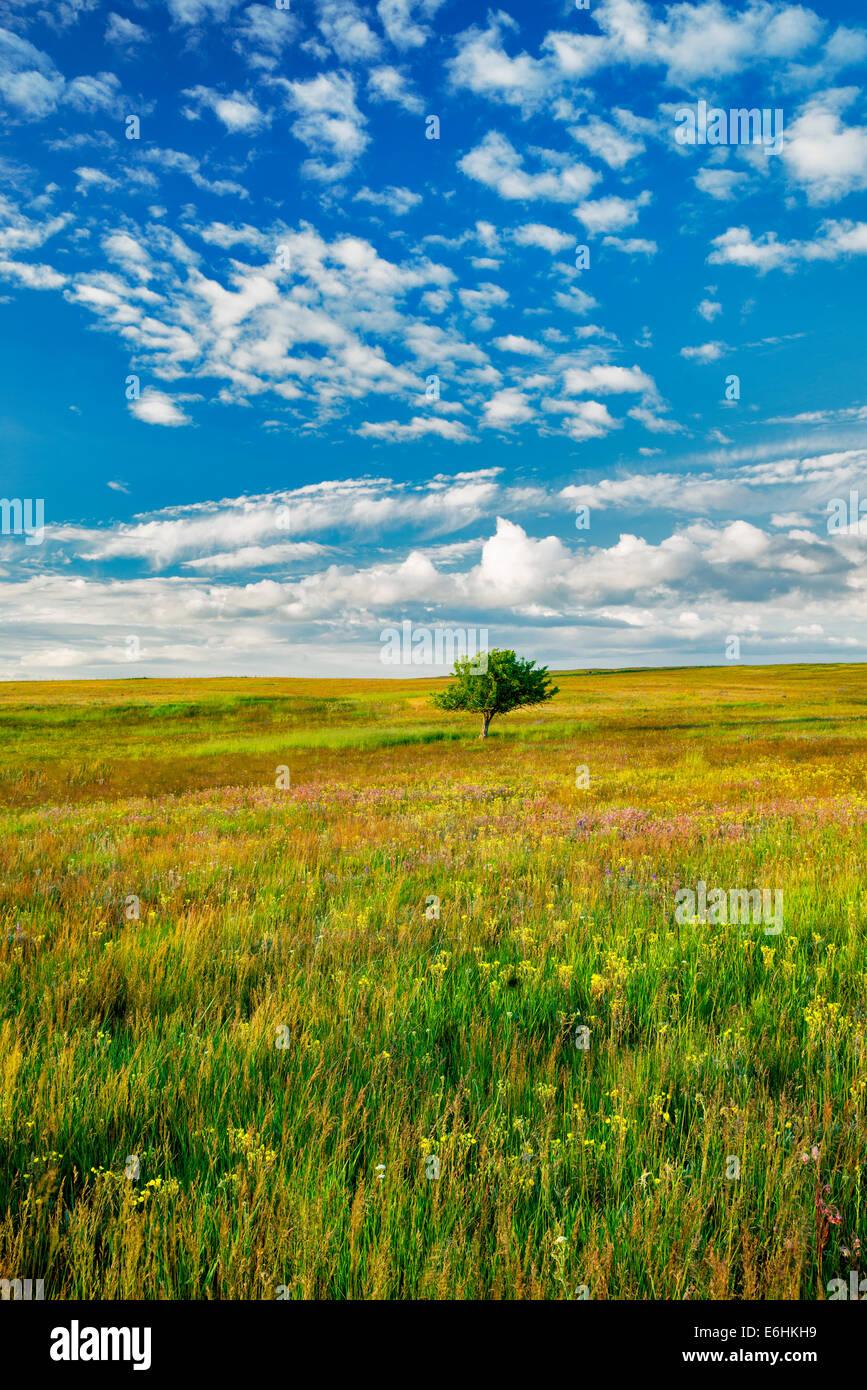 Einsamer Baum und Wildblumen. Zumwalt Prairie Preserve, Oregon Stockbild