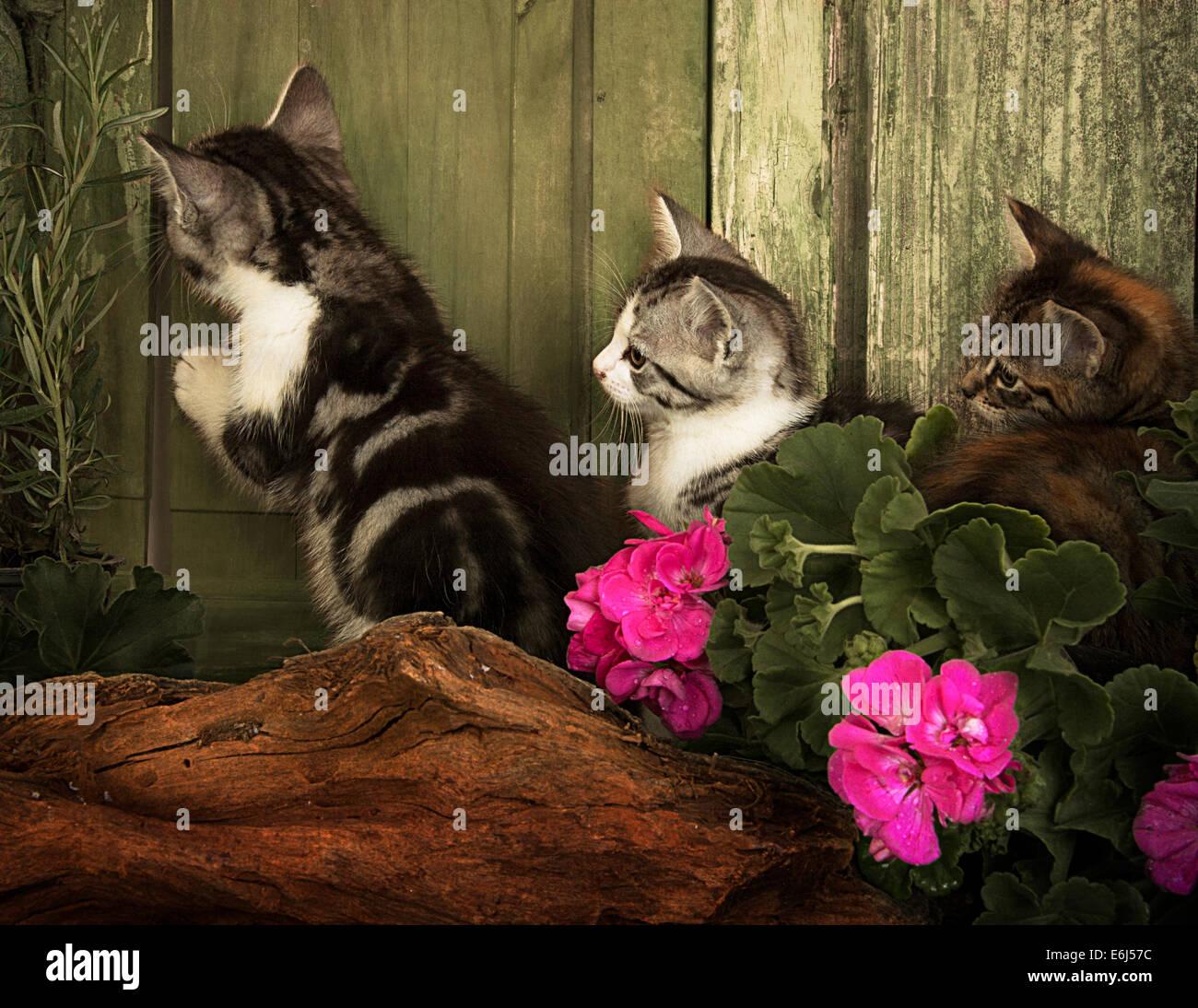 Drei junge Kätzchen an einer Tür Stockbild