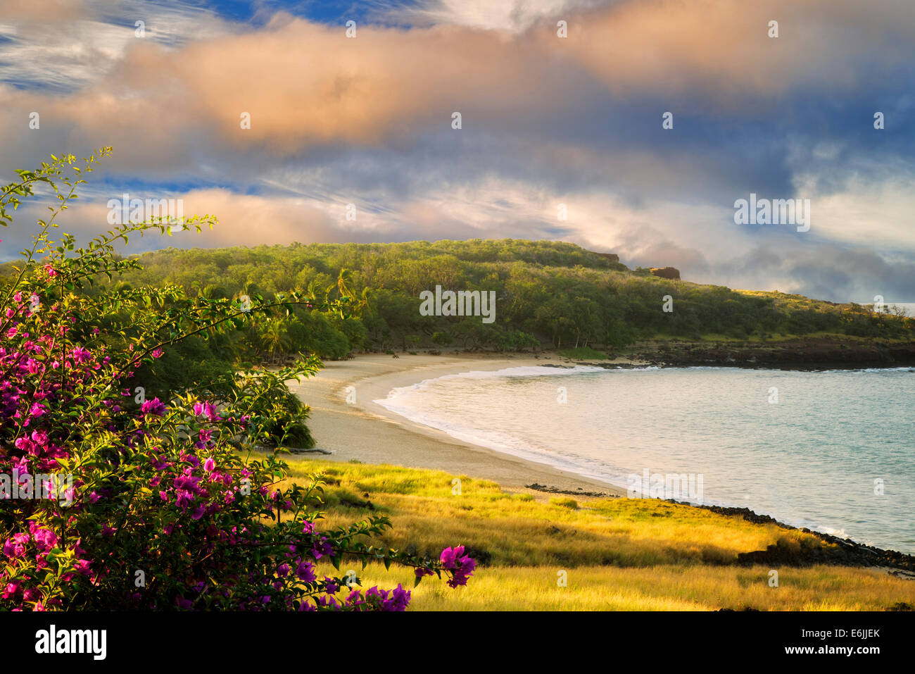 Strand im Four Seasons mit Bougainvillea-Blüten. Lanai, Hawaii. Stockbild