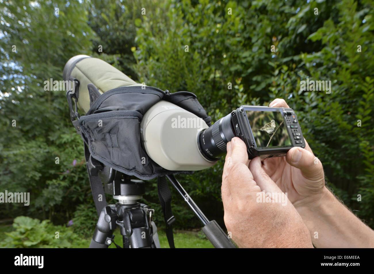 Digiscoping - eine digitale Aufnahme durch ein Vogelkundler Zielfernrohr Stockbild