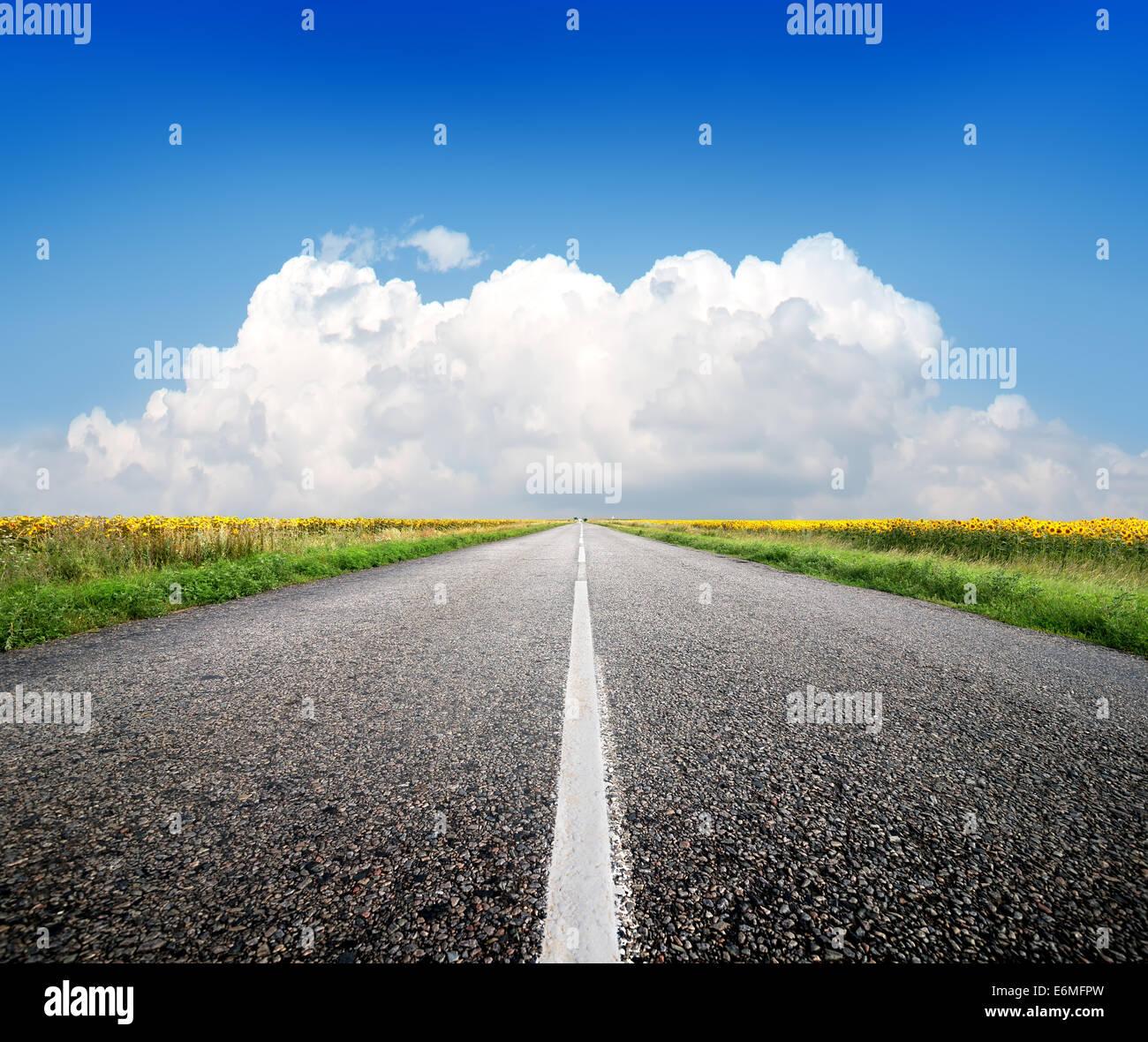 Autobahn durch das Feld von Sonnenblumen und blauer Himmel Stockbild