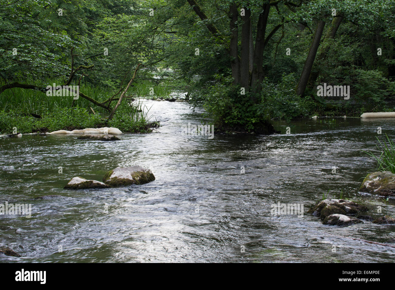 Bach, Bach, Bach, Bach, Tiefland-Bach, Naturnaher Bachlauf, wohl, Fluss, Warnow, Mecklenburg-Vorpommern Stockbild