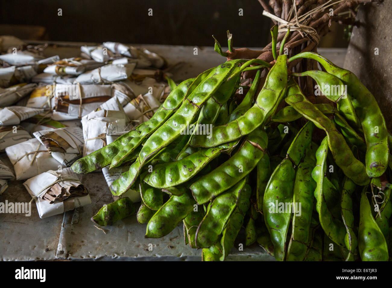 Yogyakarta, Java, Indonesien.  Petai oder Pete, Bohnen, auch bekannt als bittere Bohne, stinken Bohnen oder verdreht Stockbild