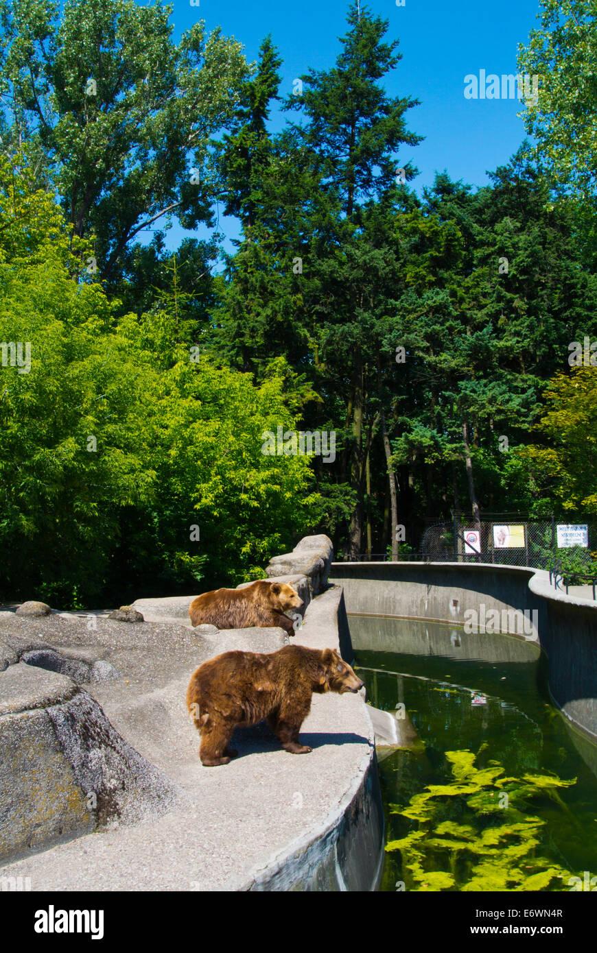 Bären im Zoo, Praga Bezirk, Warschau, Polen, Europa Stockbild