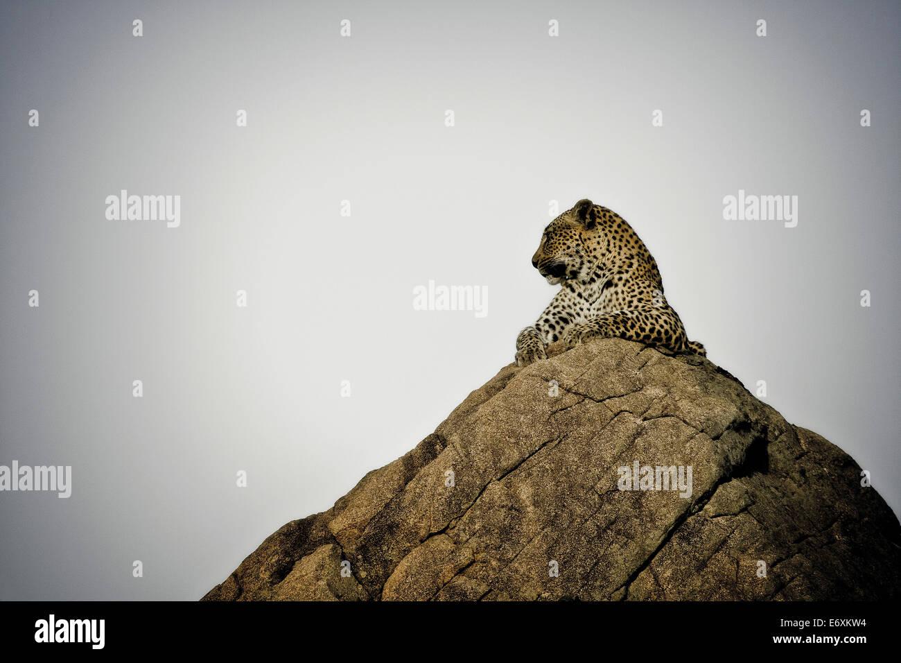 Leopard, liegend auf einem Felsen, Sabi Sands Game Reserve, Südafrika, Afrika Stockfoto