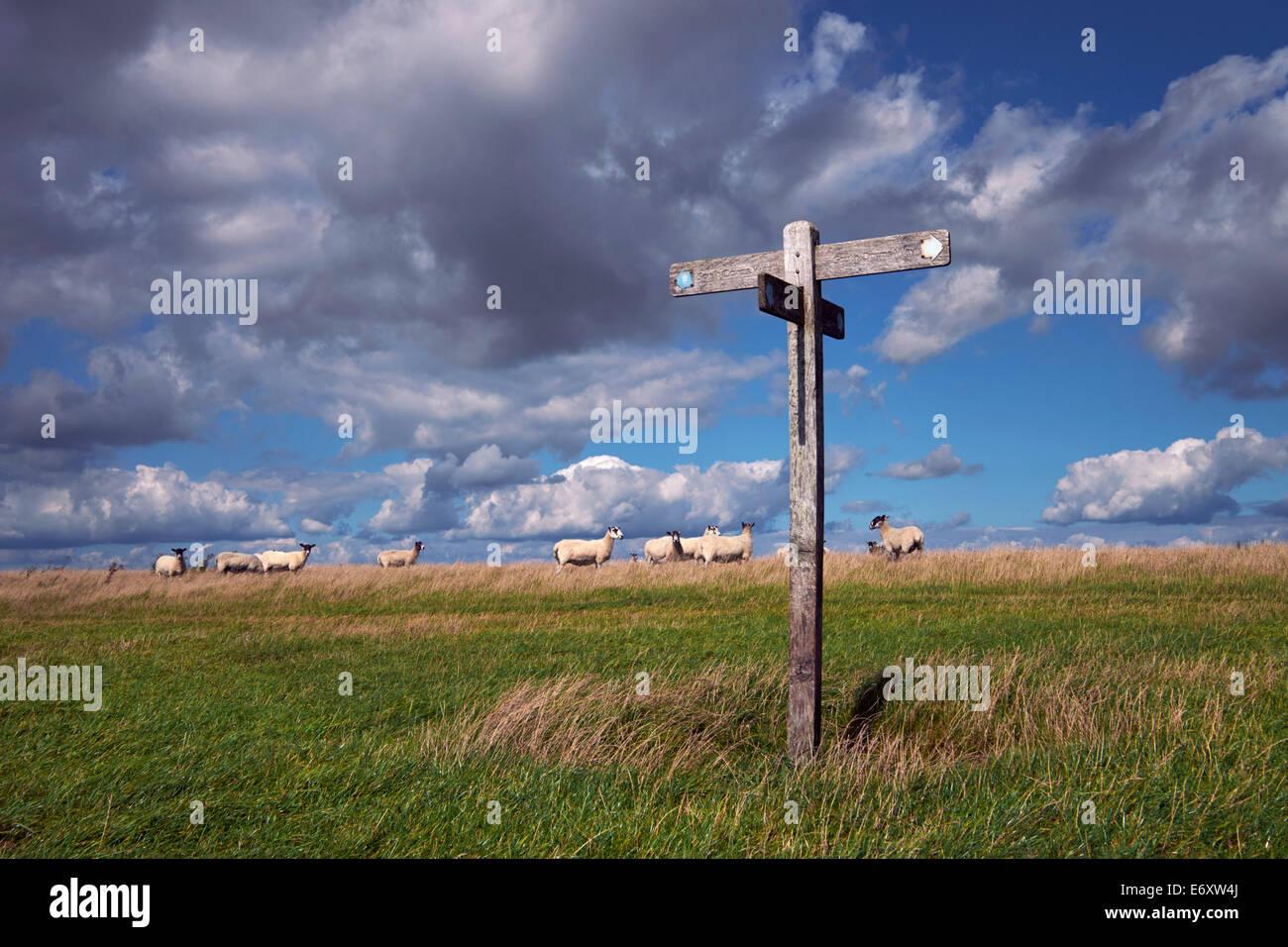 Schafe und Finger-Post unterzeichnen auf der South Downs Way in der Nähe von Bostal Hill.  Touristenort, Sussex, Stockbild
