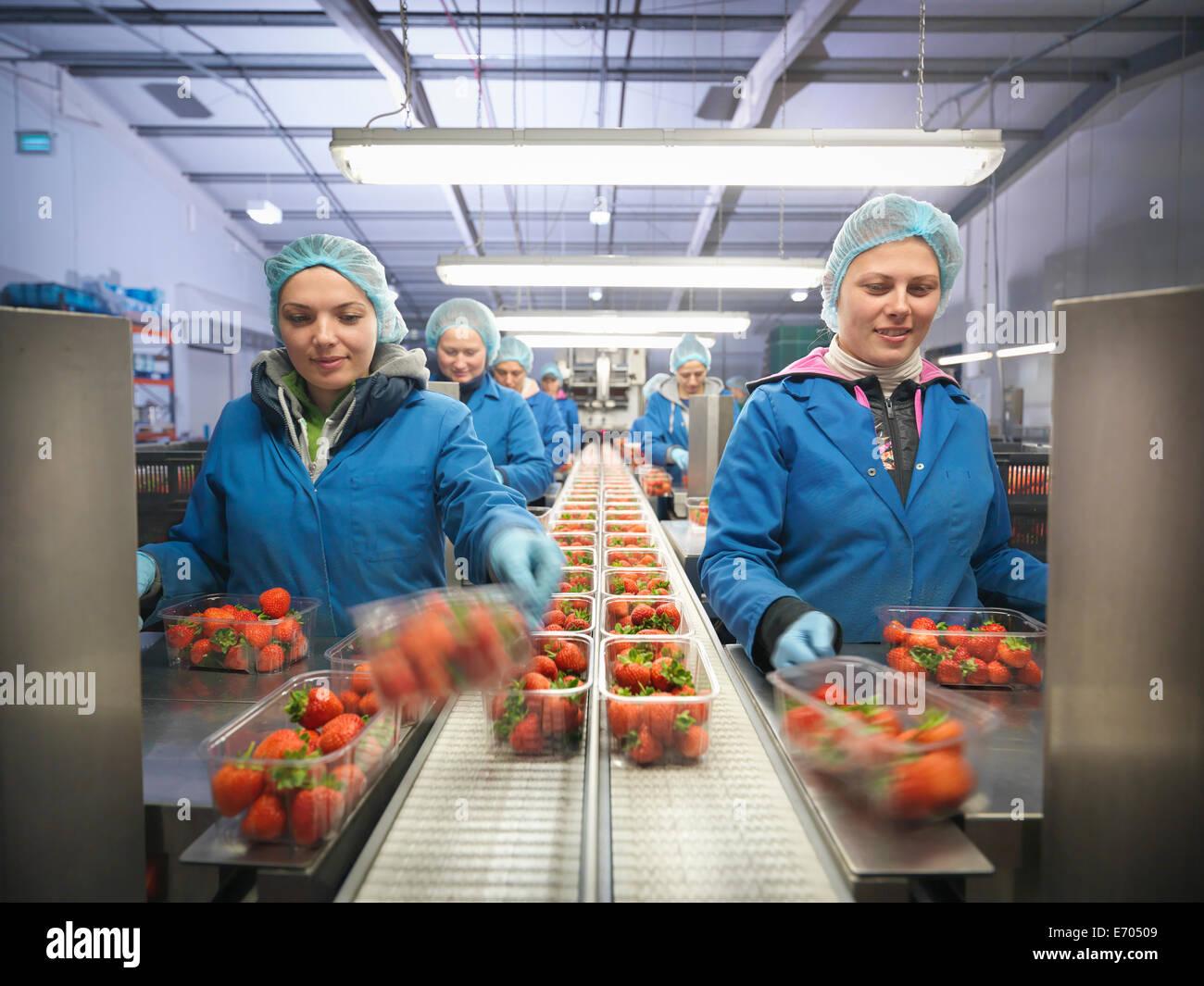 Arbeitnehmerinnen, die Verpackung von frischer Erdbeeren in Schalen auf Obsthof Stockbild