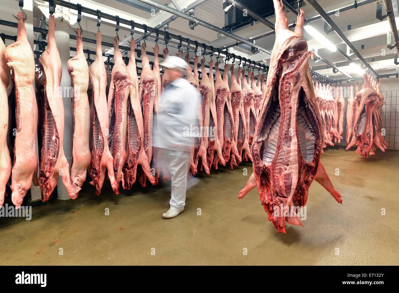 Schweinehälften im Kühlhaus eines Schlachthofs Stockbild