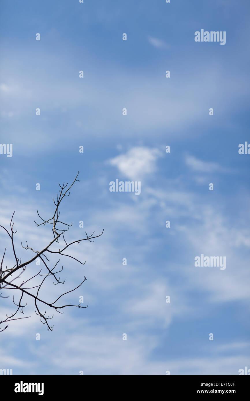 kahlen Ast gegen den Himmel Stockbild
